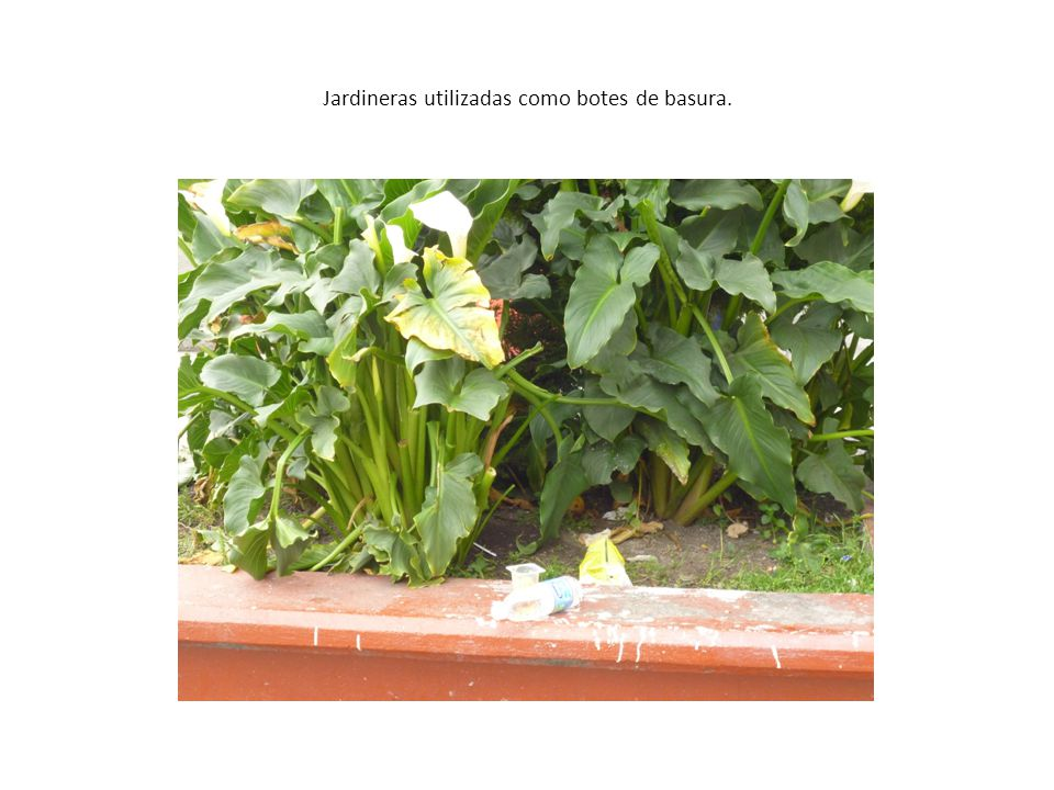 TESTIMONIOS Cuidar la escuela en todos sus espacios salones, pasillos, patio no tirando basura, respetando el ambiente.