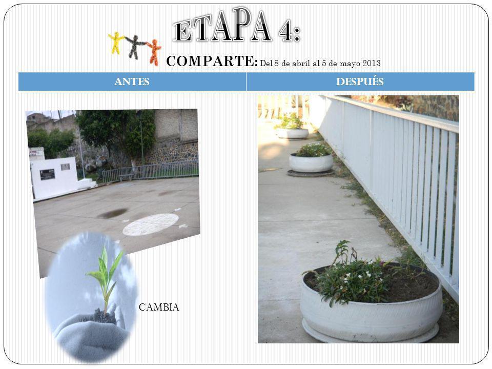 COMPARTE: Del 8 de abril al 5 de mayo 2013 ANTESDESPUÉS CAMBIA