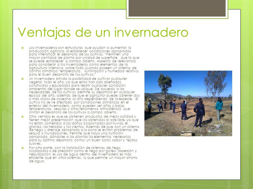 Ventajas de un invernadero Los invernaderos son estructuras que ayudan a aumentar la producción agrícola, al establecer condiciones apropiadas para in