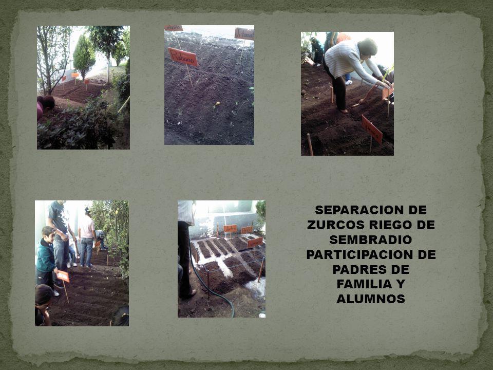 SEPARACION DE ZURCOS RIEGO DE SEMBRADIO PARTICIPACION DE PADRES DE FAMILIA Y ALUMNOS