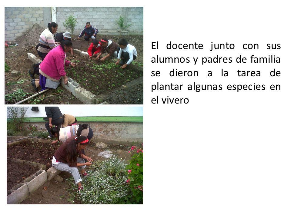 El docente junto con sus alumnos y padres de familia se dieron a la tarea de plantar algunas especies en el vivero