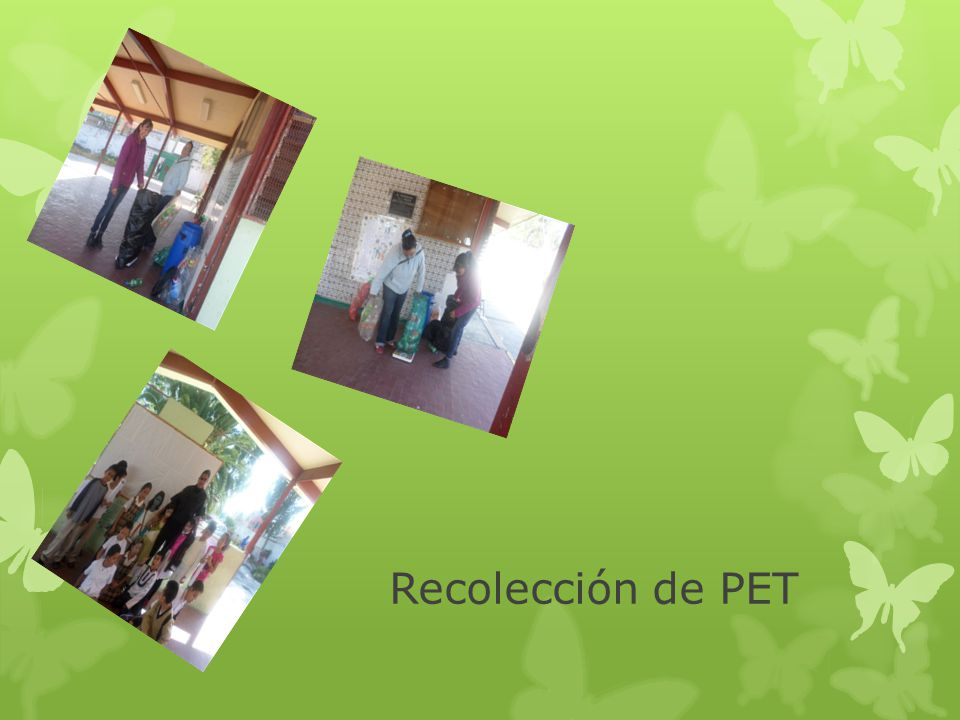 Recolección de PET
