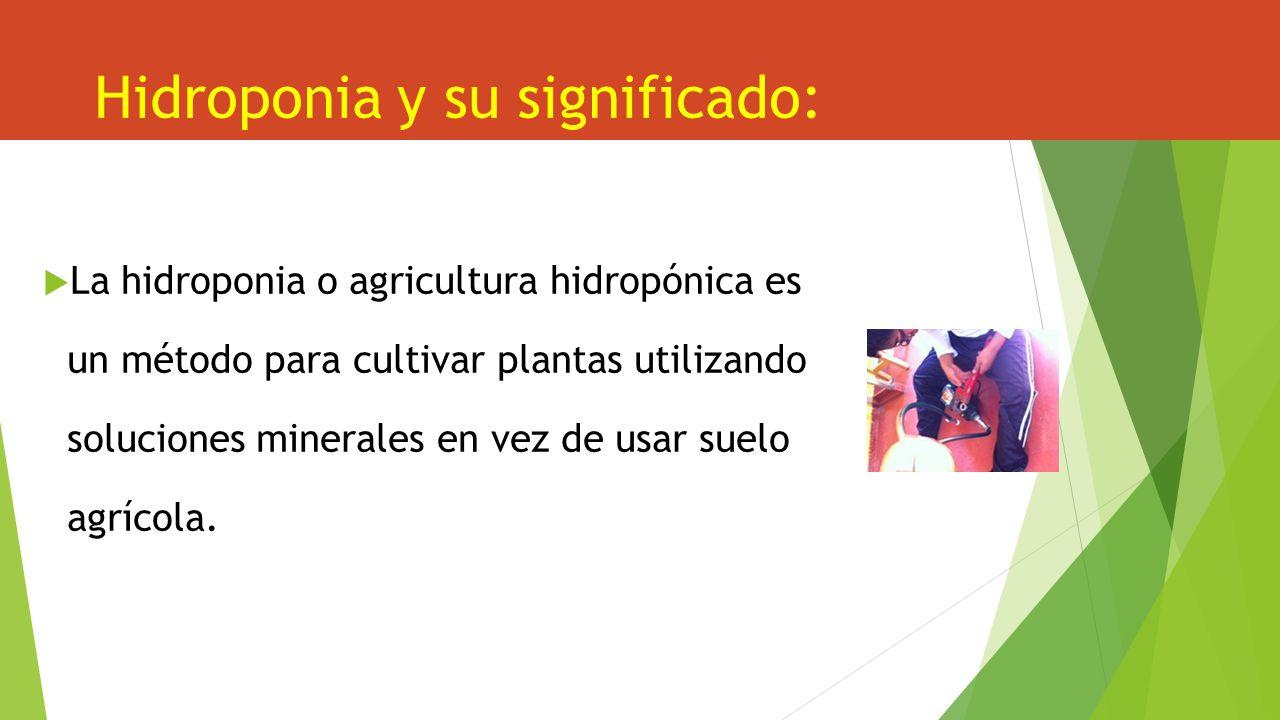 Hidroponia y su significado: La hidroponia o agricultura hidropónica es un método para cultivar plantas utilizando soluciones minerales en vez de usar