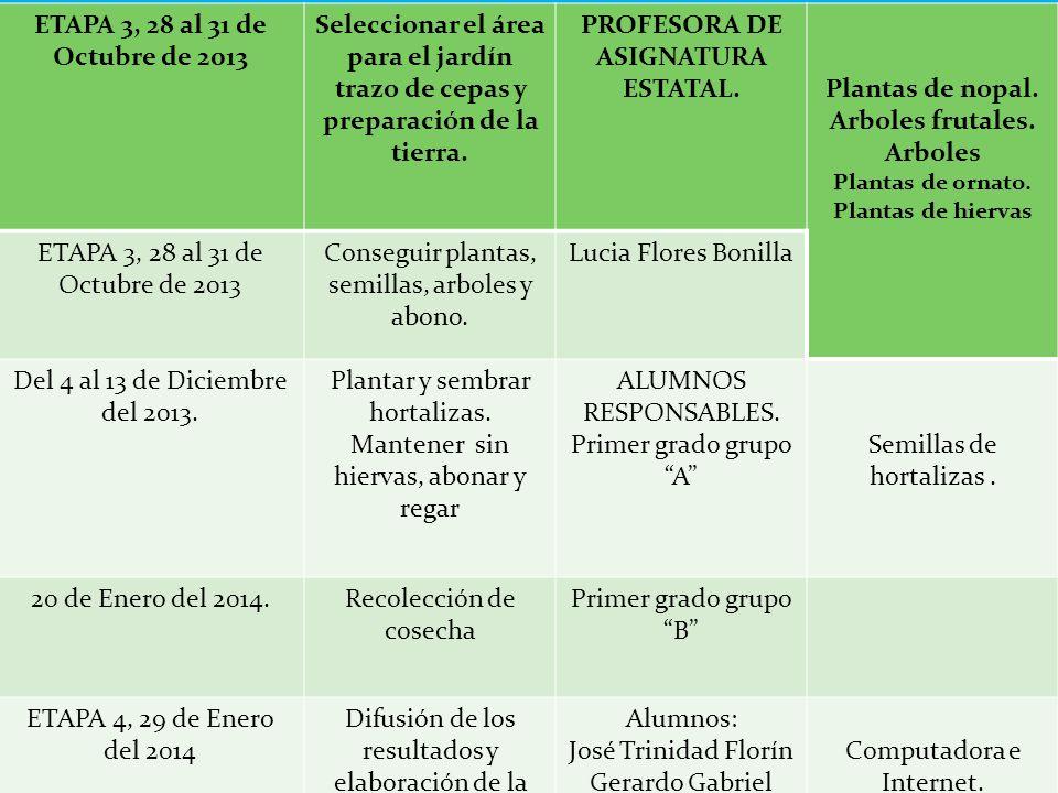 ETAPA 3, 28 al 31 de Octubre de 2013 Seleccionar el área para el jardín trazo de cepas y preparación de la tierra.