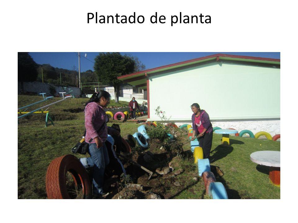 Plantado de planta