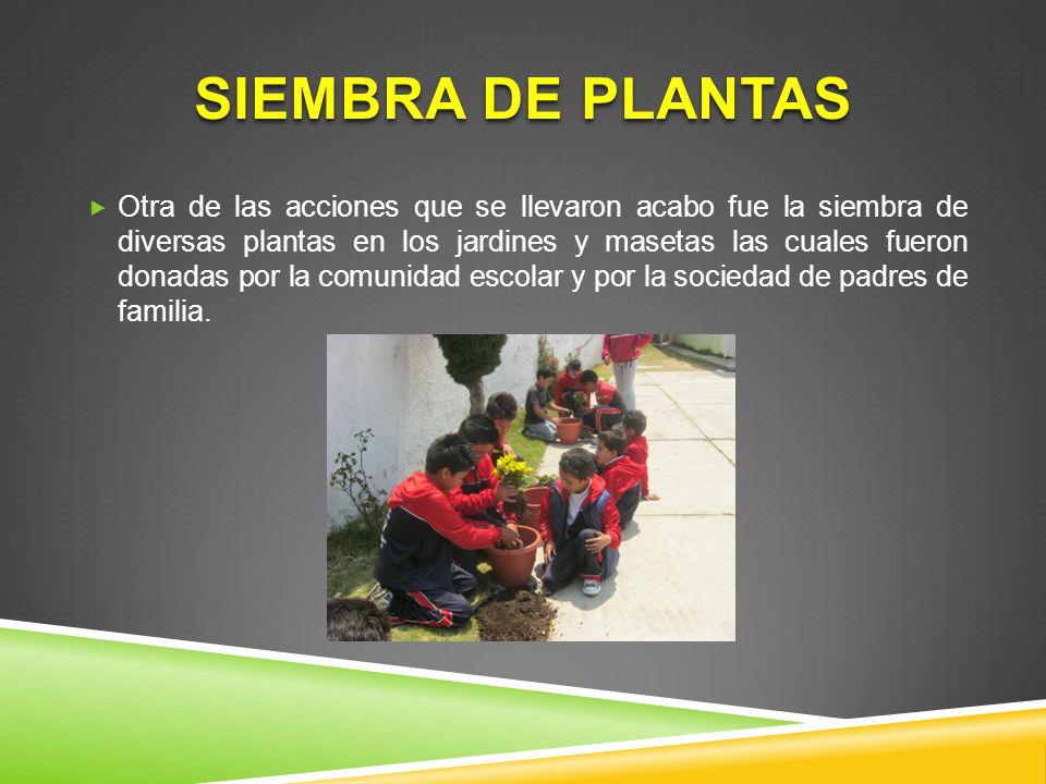 SIEMBRA DE PLANTAS Otra de las acciones que se llevaron acabo fue la siembra de diversas plantas en los jardines y masetas las cuales fueron donadas p