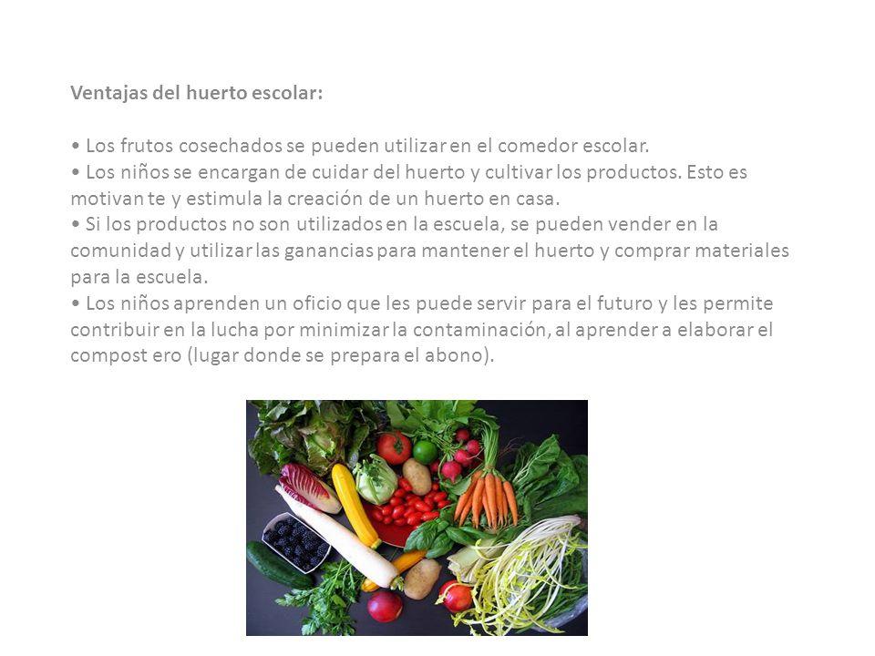 ¿Cómo sembramos en el huerto escolar? Si son granos, como el maíz o frijol, se siembra directamente en el suelo. Si es cilantro, tomate, pimentón, u o