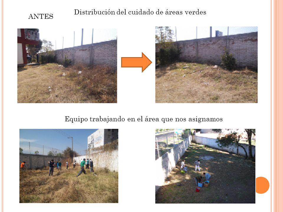 ANTES Distribución del cuidado de áreas verdes Equipo trabajando en el área que nos asignamos