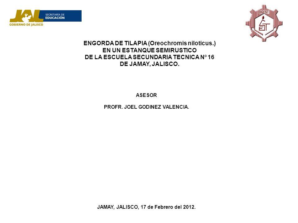 ENGORDA DE TILAPIA (Oreochromis niloticus.) EN UN ESTANQUE SEMIRUSTICO DE LA ESCUELA SECUNDARIA TECNICA Nº 16 DE JAMAY, JALISCO. ASESOR PROFR. JOEL GO
