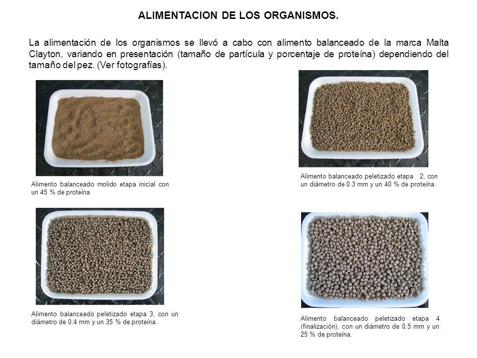 ALIMENTACION DE LOS ORGANISMOS.