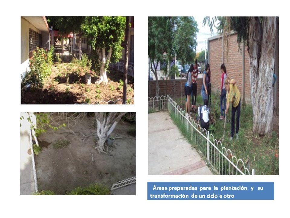 Áreas preparadas para la plantación y su transformación de un ciclo a otro