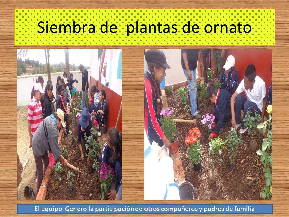 Siembra de plantas de ornato El equipo Genero la participación de otros compañeros y padres de familia