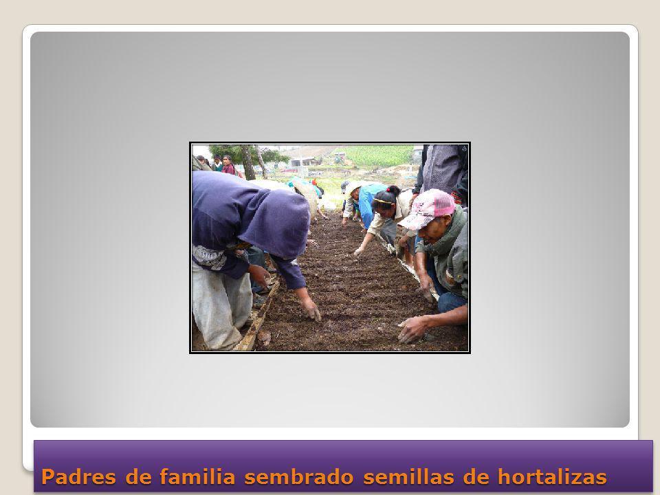 Padres de familia sembrado semillas de hortalizas