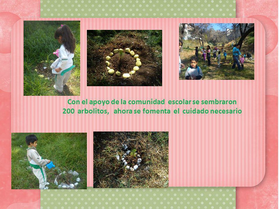 Con el apoyo de la comunidad escolar se sembraron 200 arbolitos, ahora se fomenta el cuidado necesario