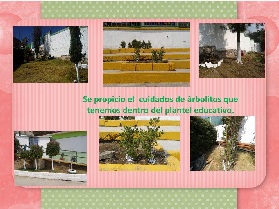 Se propicio el cuidados de árbolitos que tenemos dentro del plantel educativo.