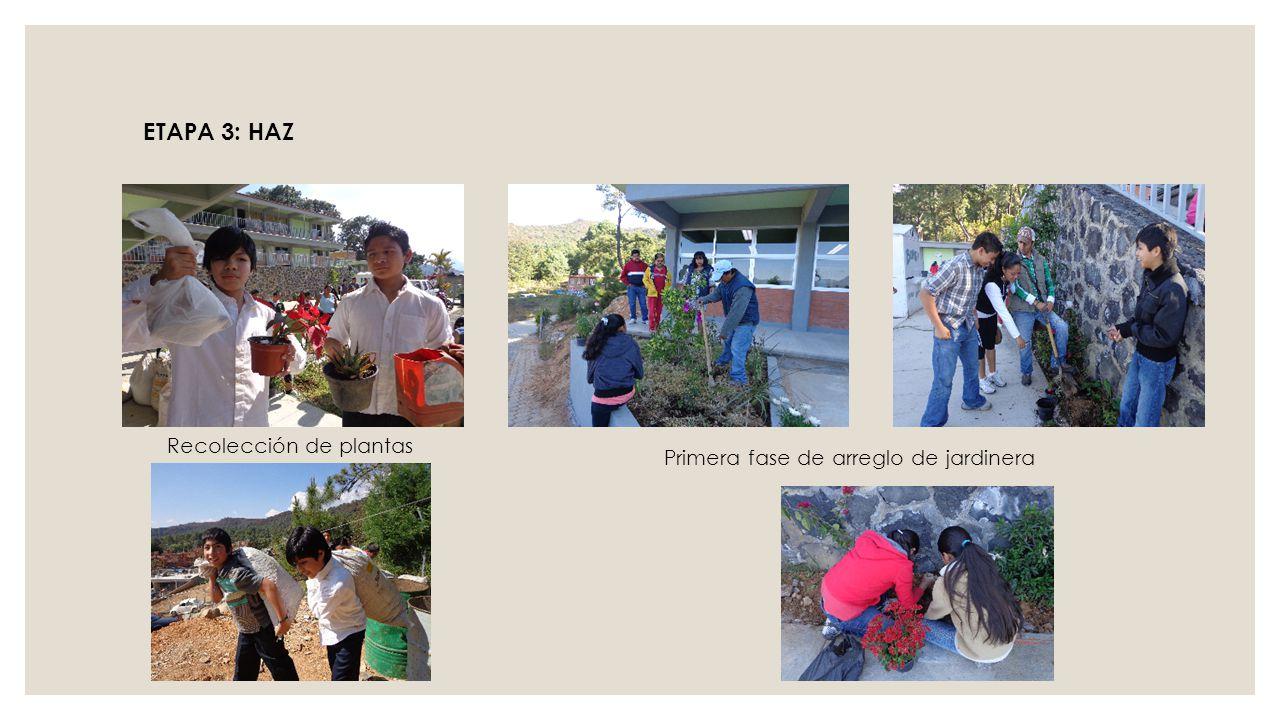 Recolección de plantas ETAPA 3: HAZ Primera fase de arreglo de jardinera