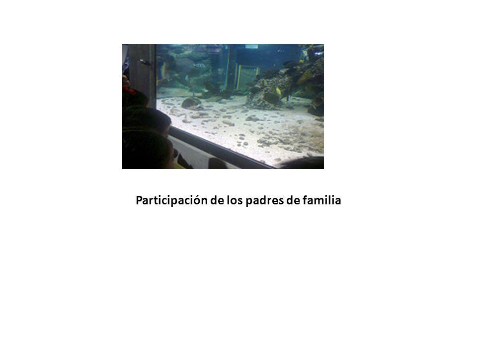 Participación de los padres de familia