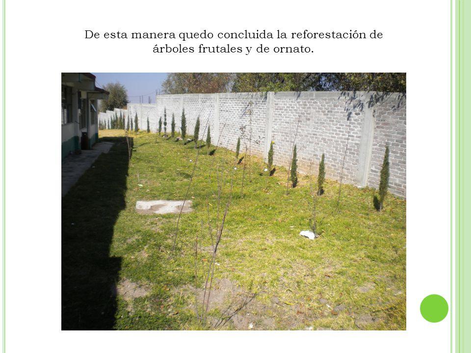 De esta manera quedo concluida la reforestación de árboles frutales y de ornato.