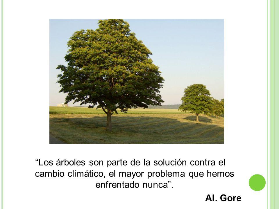 Los árboles son parte de la solución contra el cambio climático, el mayor problema que hemos enfrentado nunca.