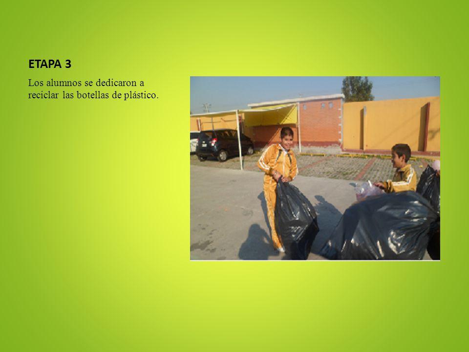 ETAPA 3 Los alumnos se dedicaron a reciclar las botellas de plástico.