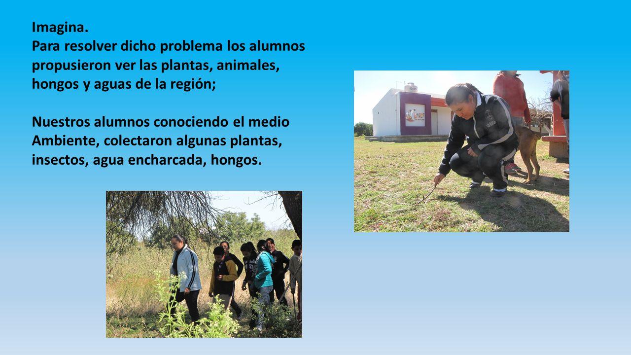 Imagina. Para resolver dicho problema los alumnos propusieron ver las plantas, animales, hongos y aguas de la región; Nuestros alumnos conociendo el m