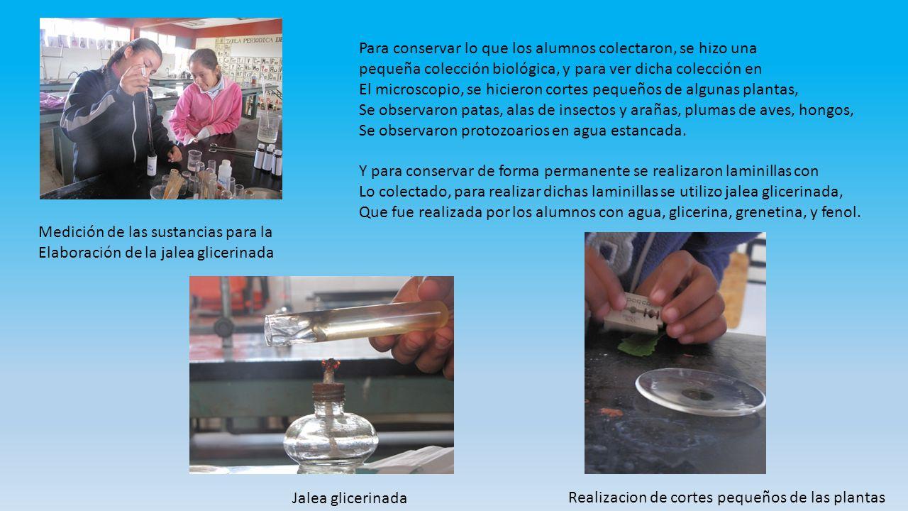 Realización de cortes de las plantas Colocación de muestras y jalea glicerina da en portaobjetos Se coloco esmalte en la orilla del cubreobjetos, para que las laminillas queden fijadas por muchos años