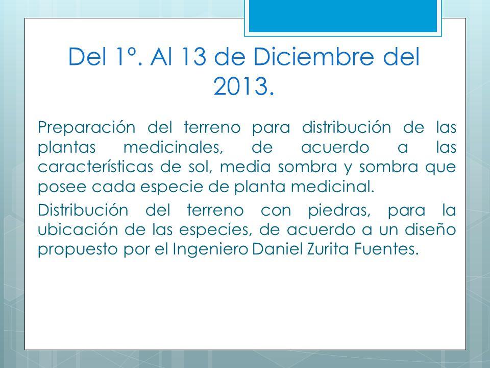 Del 1º. Al 13 de Diciembre del 2013. Preparación del terreno para distribución de las plantas medicinales, de acuerdo a las características de sol, me