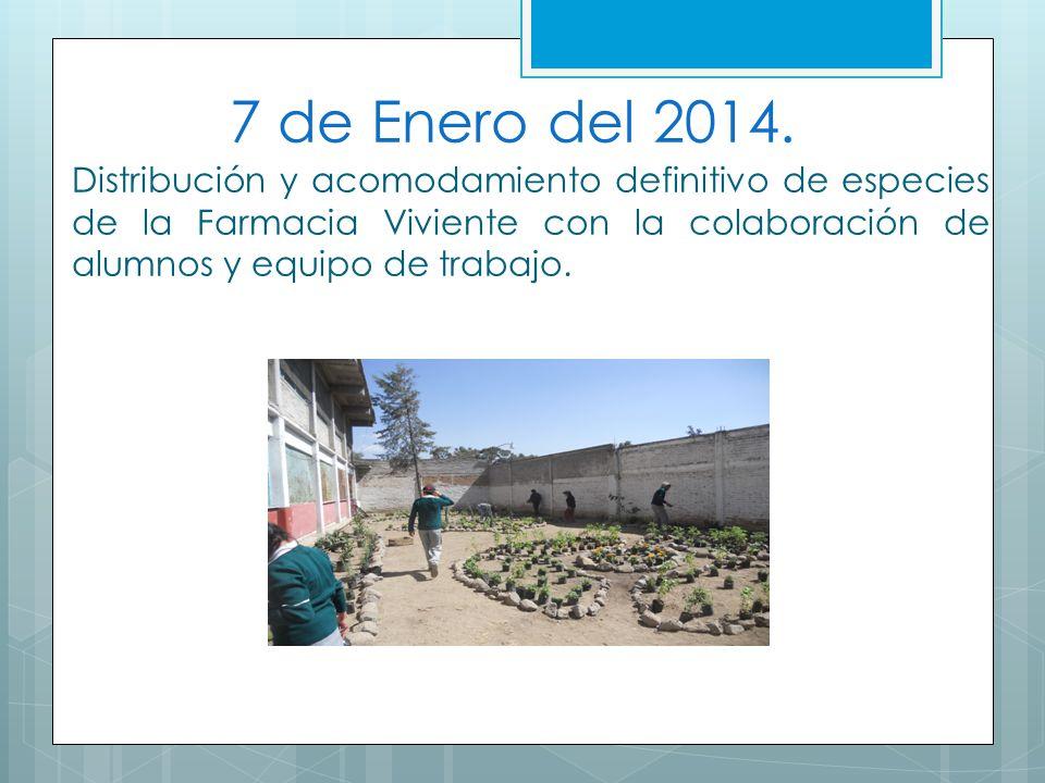 7 de Enero del 2014. Distribución y acomodamiento definitivo de especies de la Farmacia Viviente con la colaboración de alumnos y equipo de trabajo.