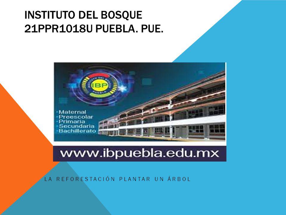 INSTITUTO DEL BOSQUE 21PPR1018U PUEBLA. PUE. LA REFORESTACIÓN PLANTAR UN ÁRBOL