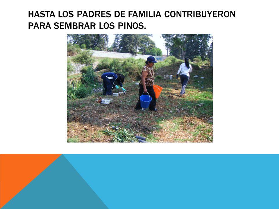 HASTA LOS PADRES DE FAMILIA CONTRIBUYERON PARA SEMBRAR LOS PINOS.