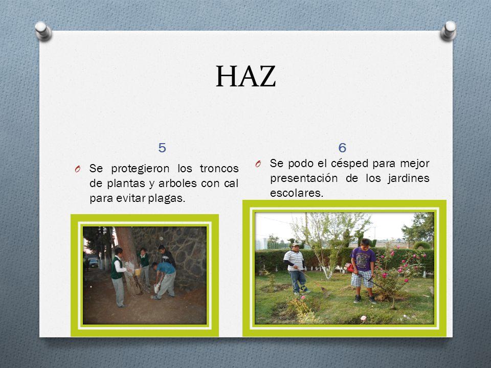 HAZ 5 6 O Se protegieron los troncos de plantas y arboles con cal para evitar plagas.