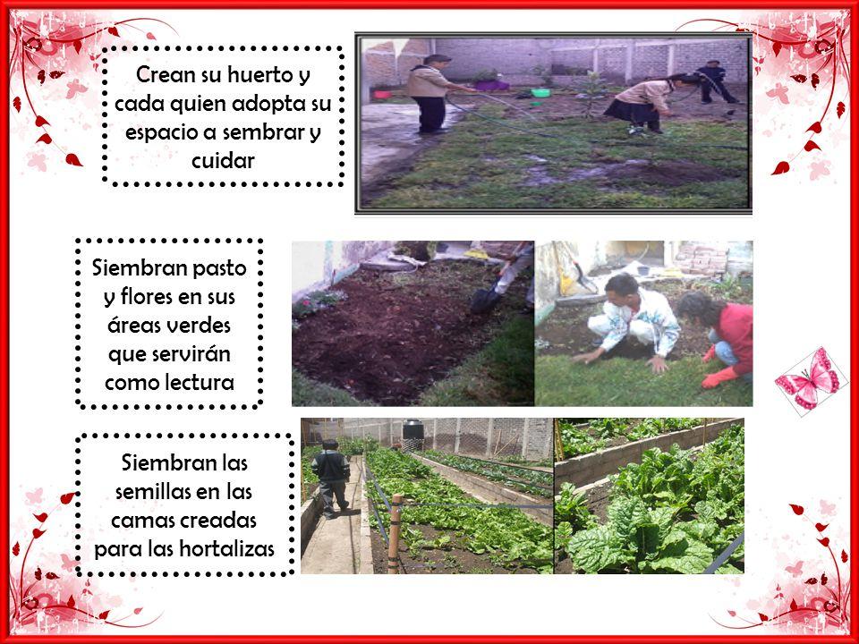Crean su huerto y cada quien adopta su espacio a sembrar y cuidar Siembran pasto y flores en sus áreas verdes que servirán como lectura Siembran las semillas en las camas creadas para las hortalizas