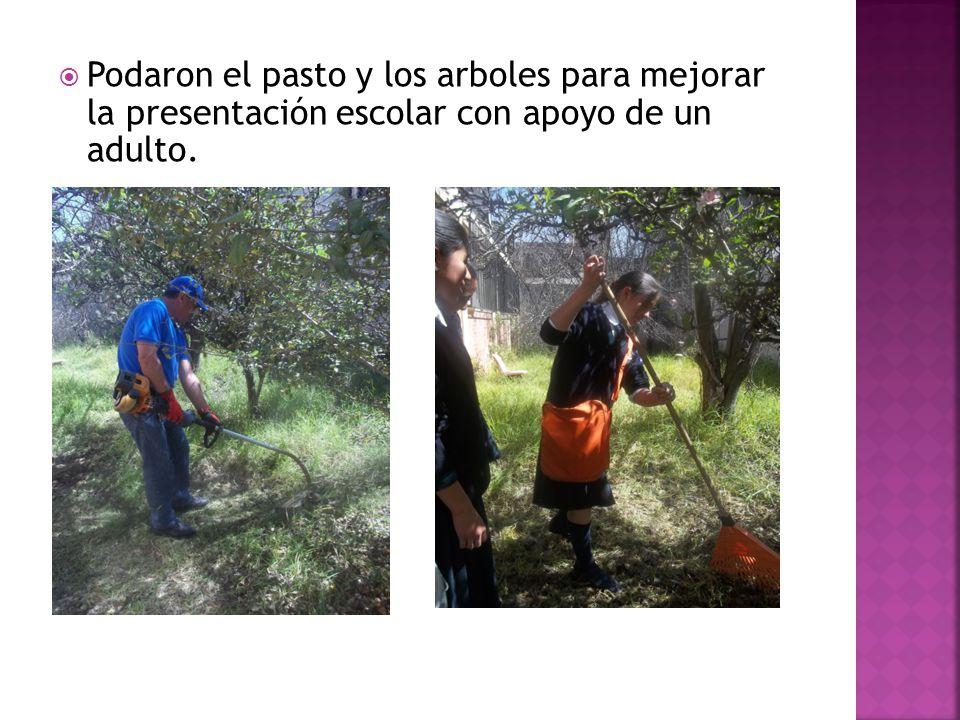 Podaron el pasto y los arboles para mejorar la presentación escolar con apoyo de un adulto.