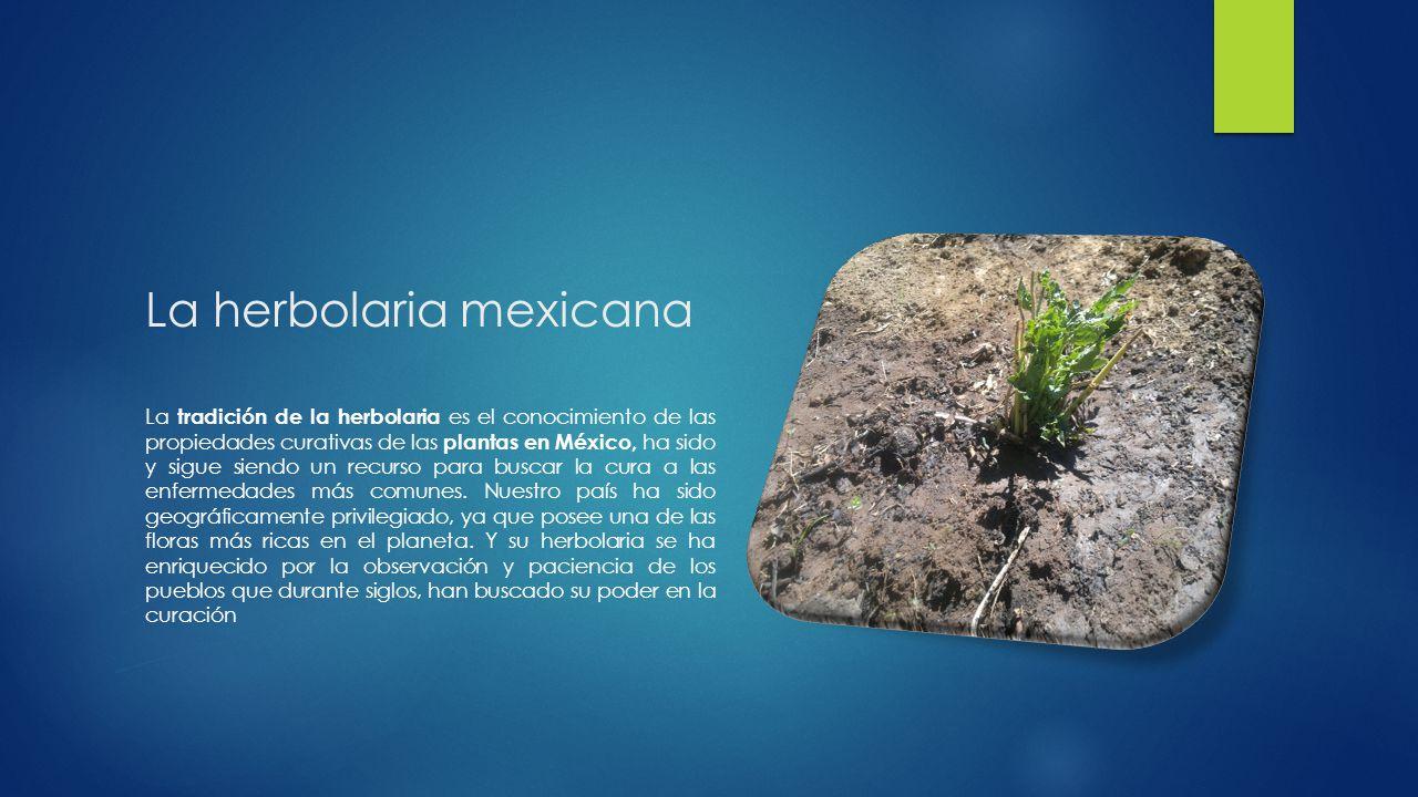 La herbolaria mexicana La tradición de la herbolaria es el conocimiento de las propiedades curativas de las plantas en México, ha sido y sigue siendo