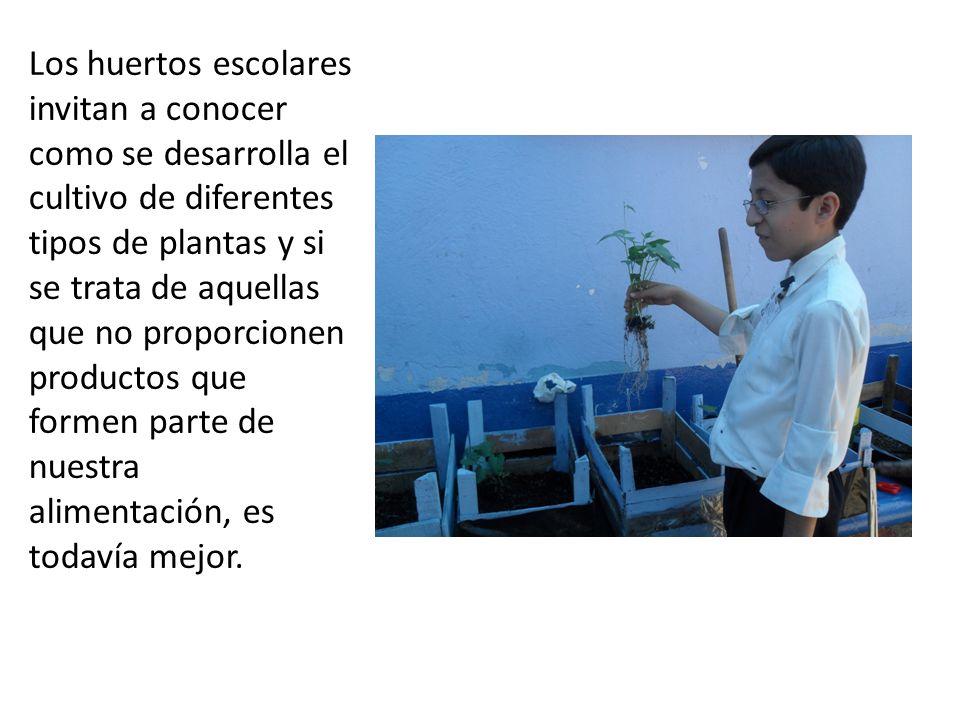 Los huertos escolares invitan a conocer como se desarrolla el cultivo de diferentes tipos de plantas y si se trata de aquellas que no proporcionen pro