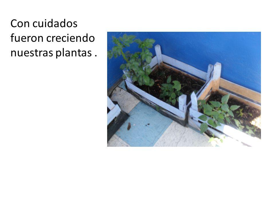 Con cuidados fueron creciendo nuestras plantas.