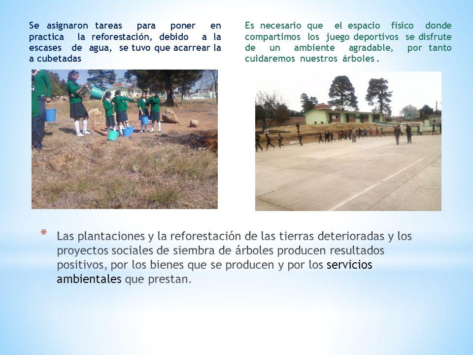Se asignaron tareas para poner en practica la reforestación, debido a la escases de agua, se tuvo que acarrear la a cubetadas Es necesario que el espa