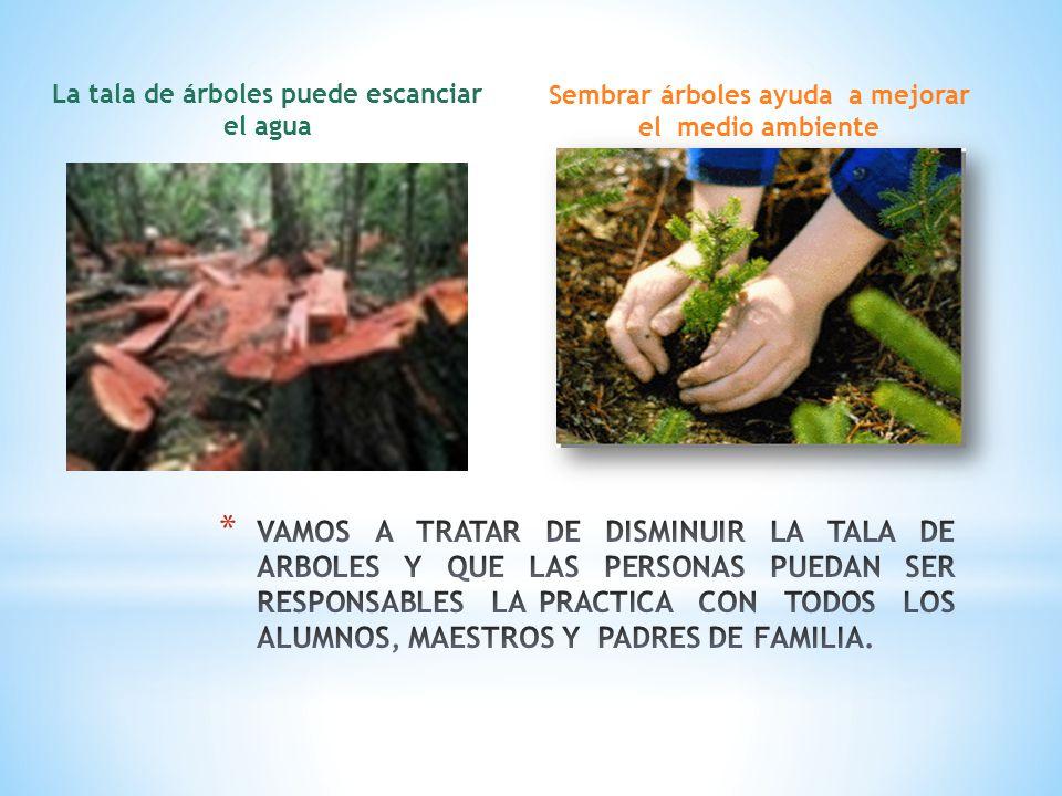 Sembrar árboles ayuda a mejorar el medio ambiente La tala de árboles puede escanciar el agua