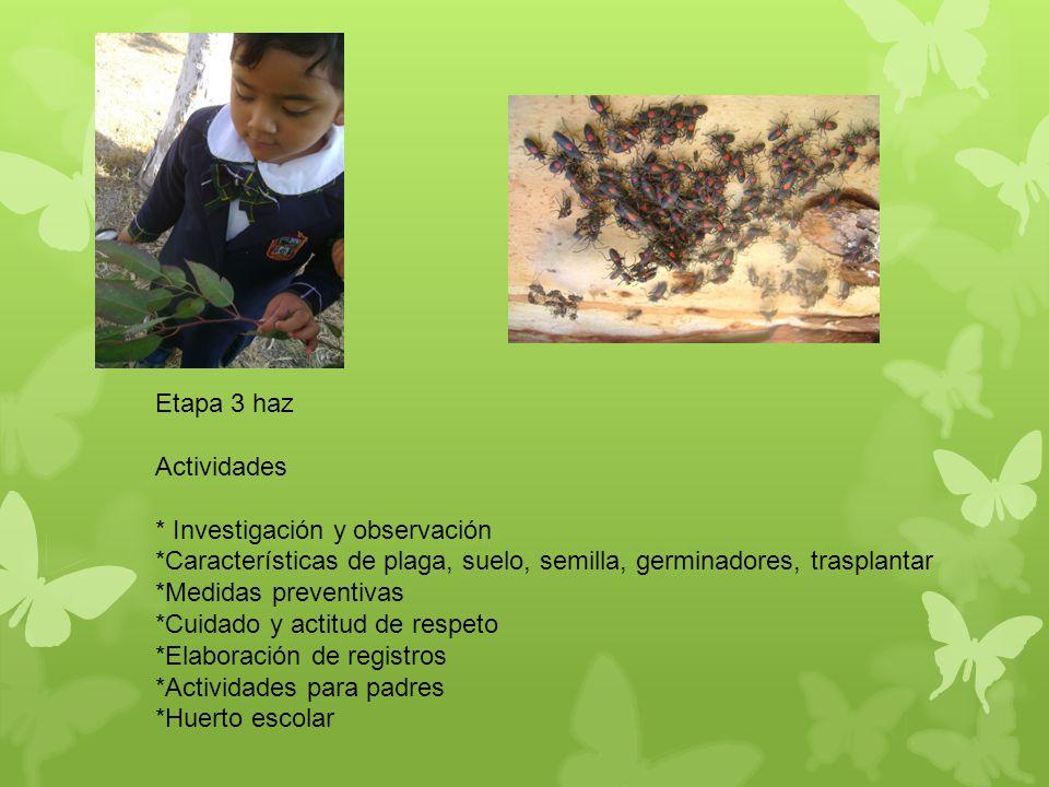 Exposición de la investigación sobre el tipo de plagas, características del suelo, que tipo de árboles se pueden plantar.