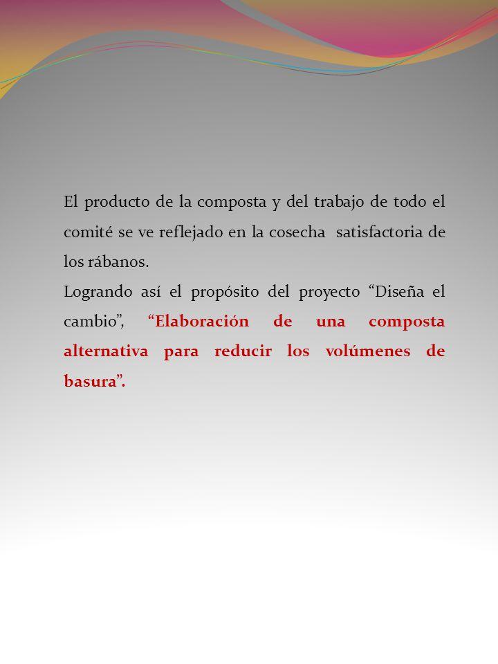 El producto de la composta y del trabajo de todo el comité se ve reflejado en la cosecha satisfactoria de los rábanos. Logrando así el propósito del p