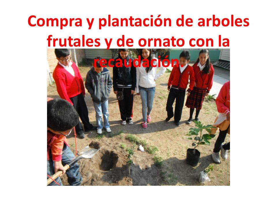 Compra y plantación de arboles frutales y de ornato con la recaudación.