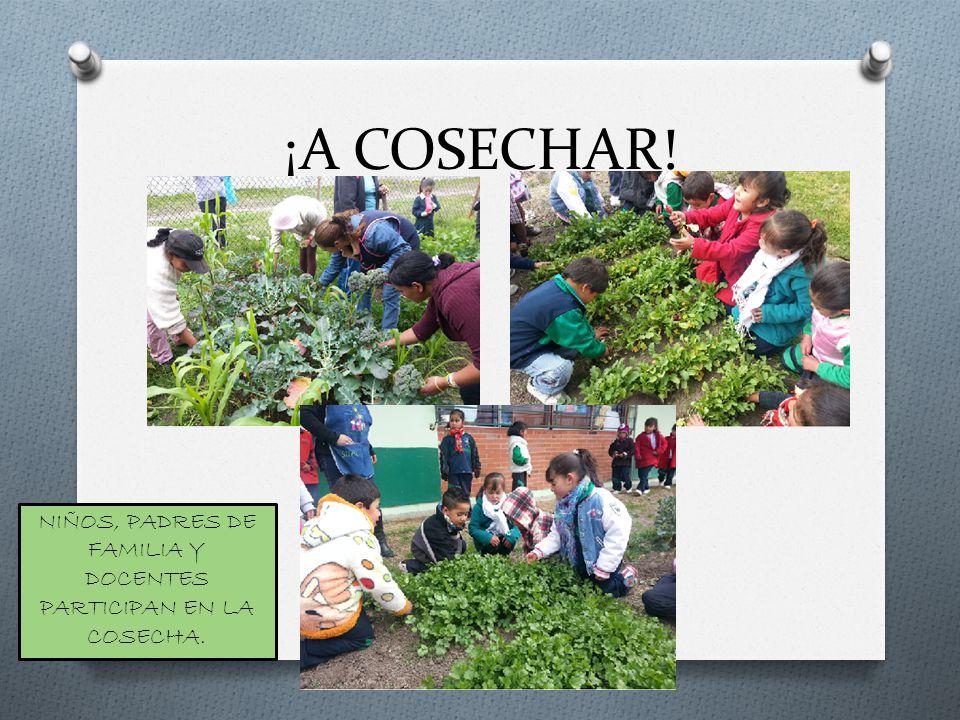 ¡A COSECHAR! NIÑOS, PADRES DE FAMILIA Y DOCENTES PARTICIPAN EN LA COSECHA.