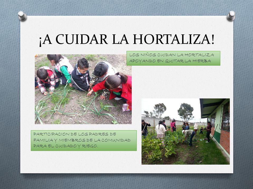 ¡A CUIDAR LA HORTALIZA! LOS NIÑOS CUIDAN LA HORTALIZA APOYANDO EN QUITAR LA HIERBA PARTICIPACION DE LOS PADRES DE FAMILIA Y MIEMBROS DE LA COMUNIDAD P