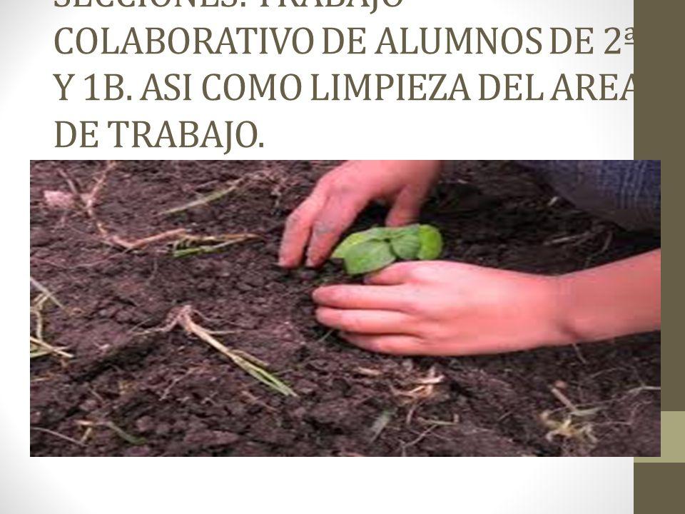 SECCIONES: TRABAJO COLABORATIVO DE ALUMNOS DE 2ª Y 1B. ASI COMO LIMPIEZA DEL AREA DE TRABAJO.