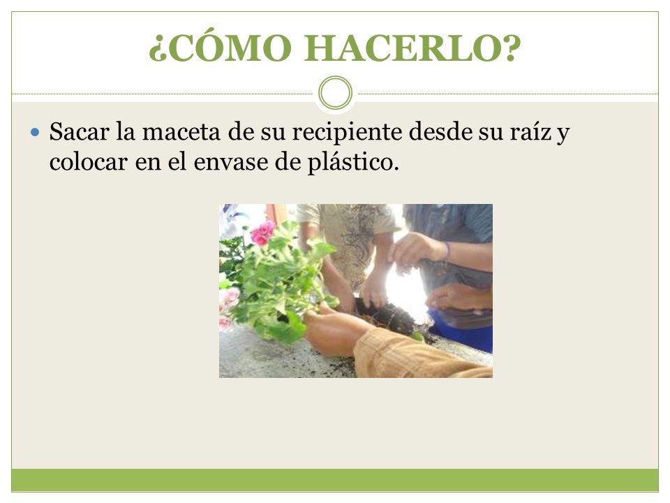 ¿CÓMO HACERLO Sacar la maceta de su recipiente desde su raíz y colocar en el envase de plástico.
