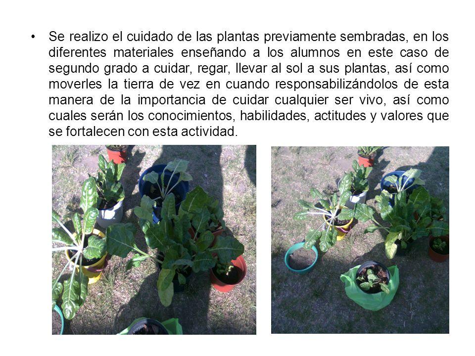 Se realizo el cuidado de las plantas previamente sembradas, en los diferentes materiales enseñando a los alumnos en este caso de segundo grado a cuida