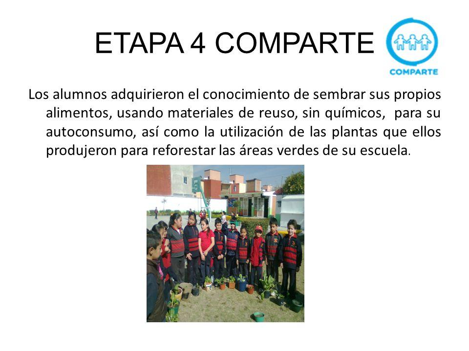 ETAPA 4 COMPARTE Los alumnos adquirieron el conocimiento de sembrar sus propios alimentos, usando materiales de reuso, sin químicos, para su autoconsu