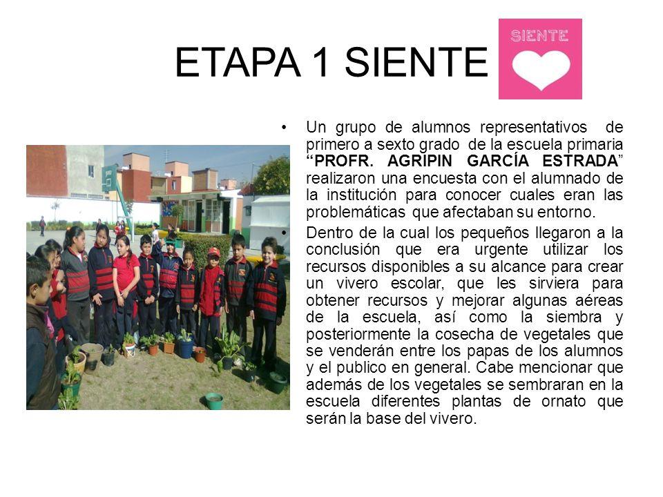ETAPA 1 SIENTE Un grupo de alumnos representativos de primero a sexto grado de la escuela primaria PROFR. AGRIPIN GARCÍA ESTRADA realizaron una encues
