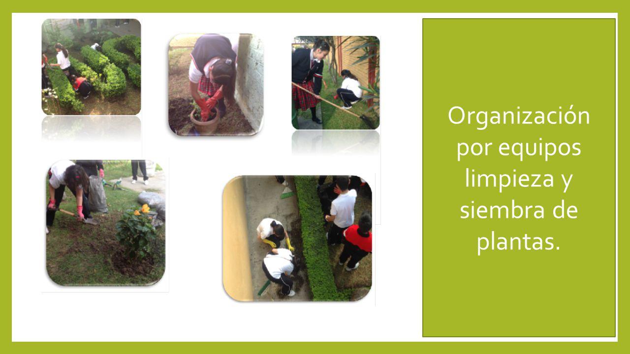 Organización por equipos limpieza y siembra de plantas.