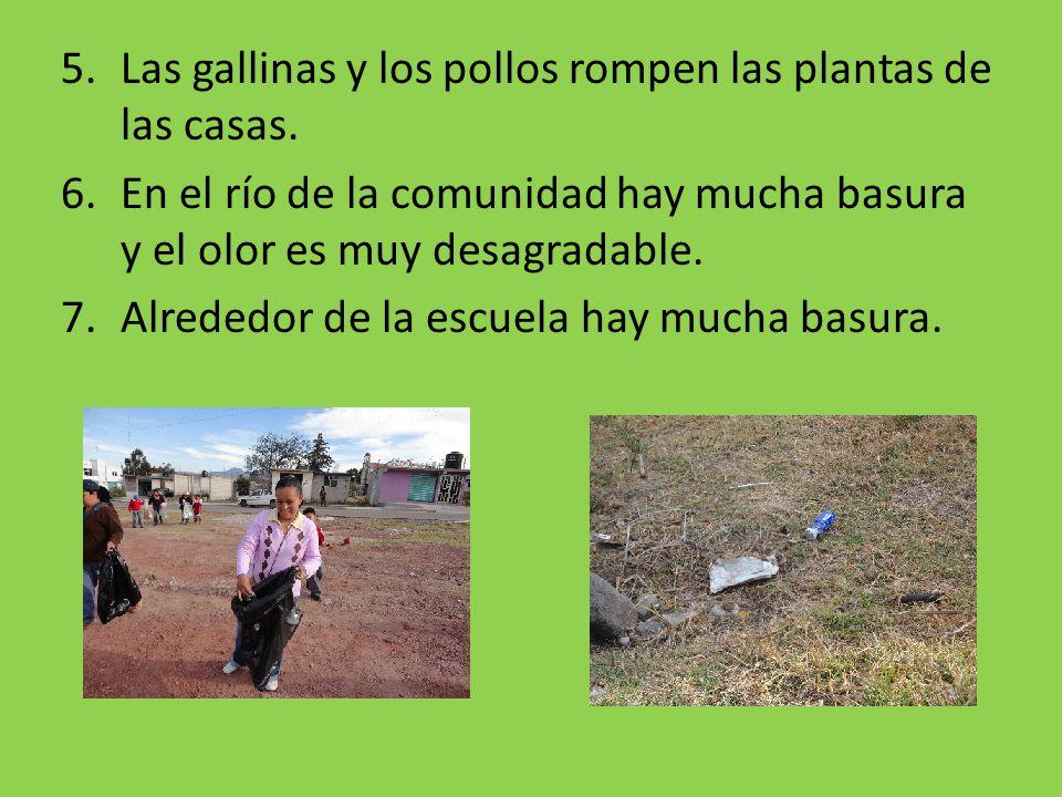 5.Las gallinas y los pollos rompen las plantas de las casas. 6.En el río de la comunidad hay mucha basura y el olor es muy desagradable. 7.Alrededor d